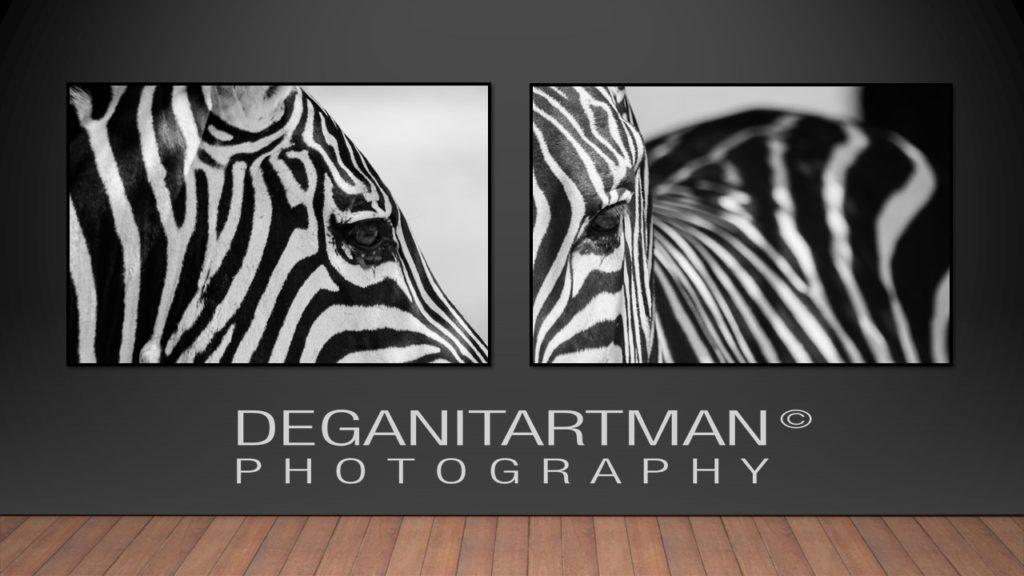 deganit-artman-zebra-card